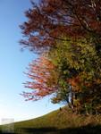 Herbst bei Allenwinden 03