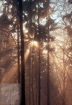 Nebelstern 02