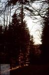 Wald-Abend