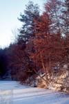 Winter am Weiher