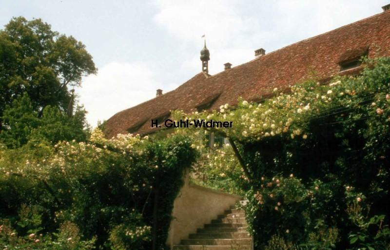 Ittinger Rosengarten 23