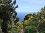 Weg ans Meer, Tenerife, 19.03.08